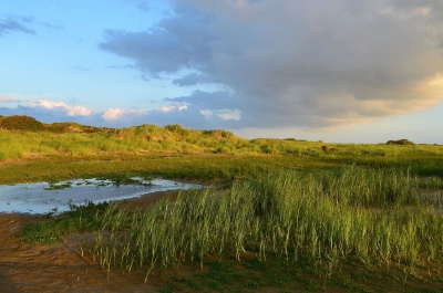 landscape, water, land, sky, grass, swamp, marsh, summer, vegetation