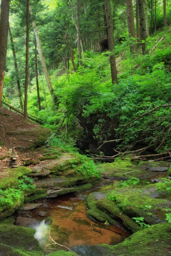wood, landscape, nature, water, leaf, tree, moss, forest