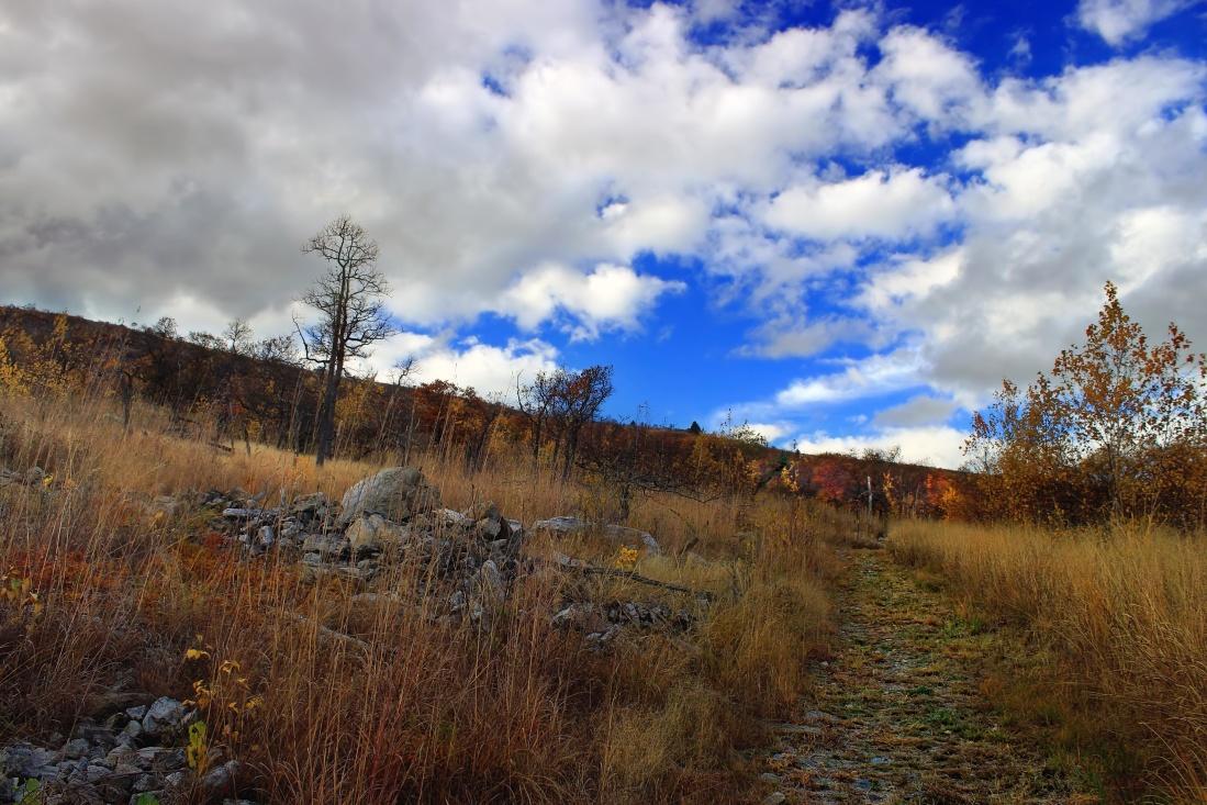 landscape, tree, nature, sky, wood, hill, autumn, cloud