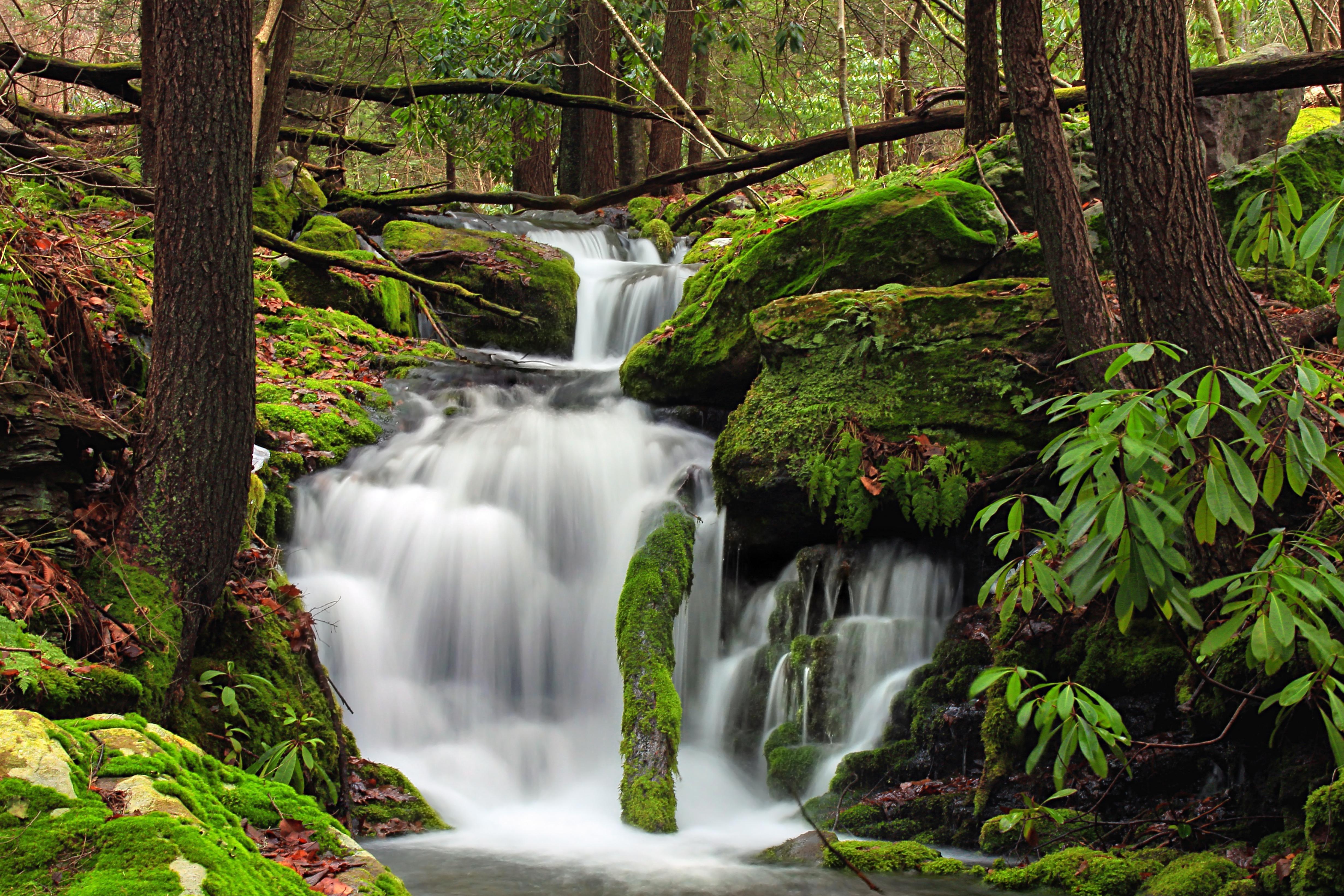 Imagen gratis madera cascada naturaleza agua hoja for Motor para cascada de agua