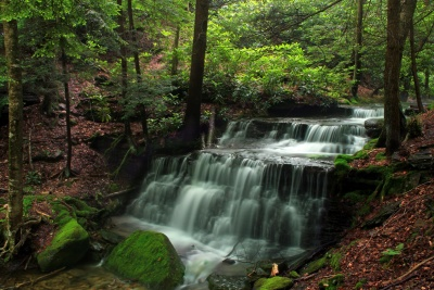 water, waterfall, wood, nature, river, leaf, creek, stream, moss