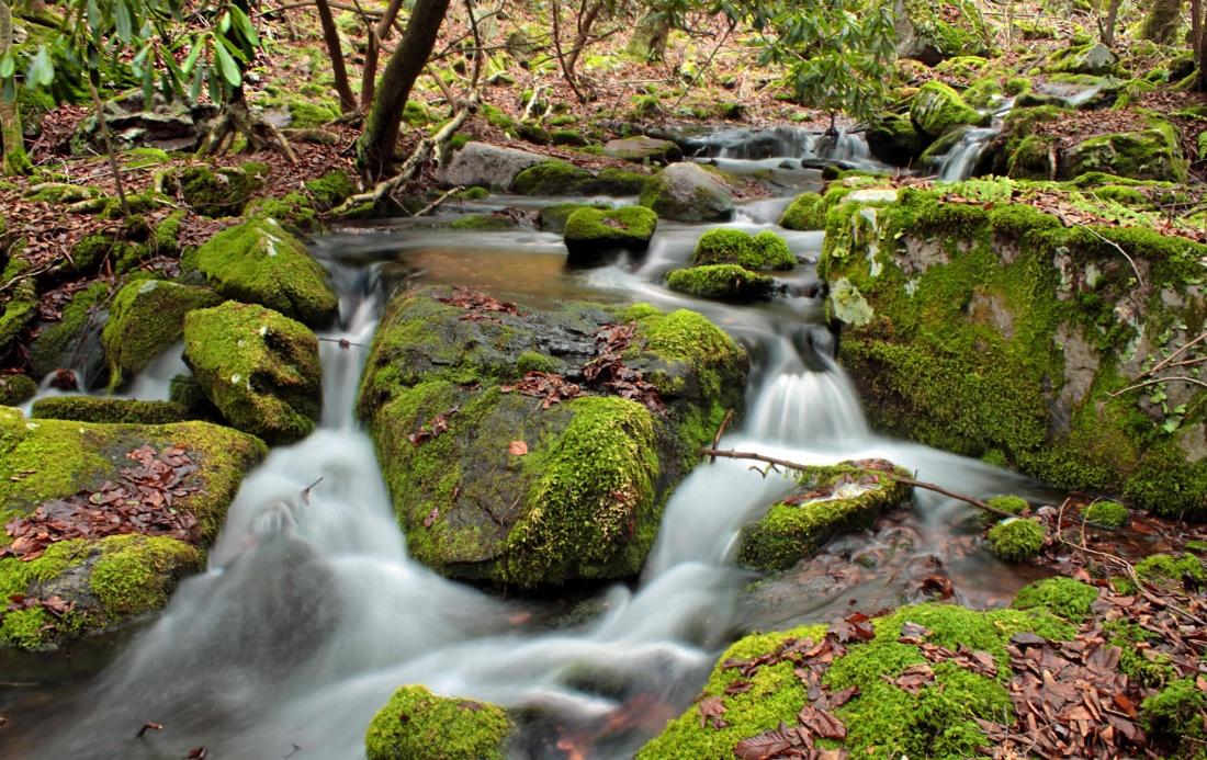 water, waterfall, stream, moss, leaf, nature, river, creek, stone