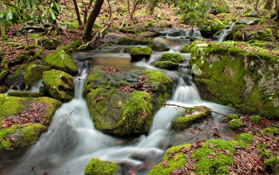water, waterfall, stream, moss, leaf, nature, river, creek, stone