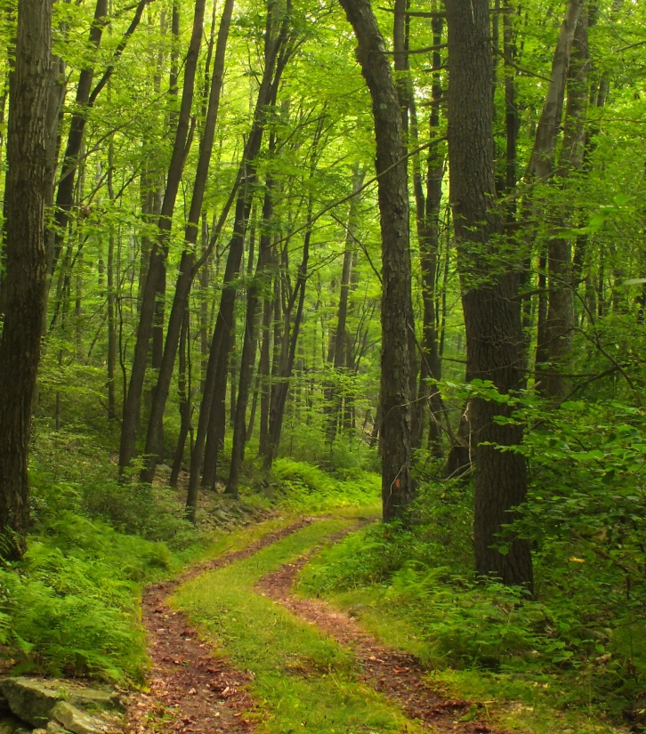 wood, nature, landscape, leaf, tree, dawn, forest, pathway