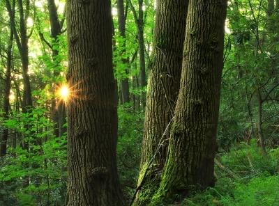 wood, tree, nature, landscape, leaf, environment, daylight, flora, summer, sun