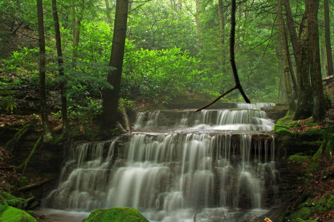 wood, water, nature, waterfall, leaf, river, wet, landscape