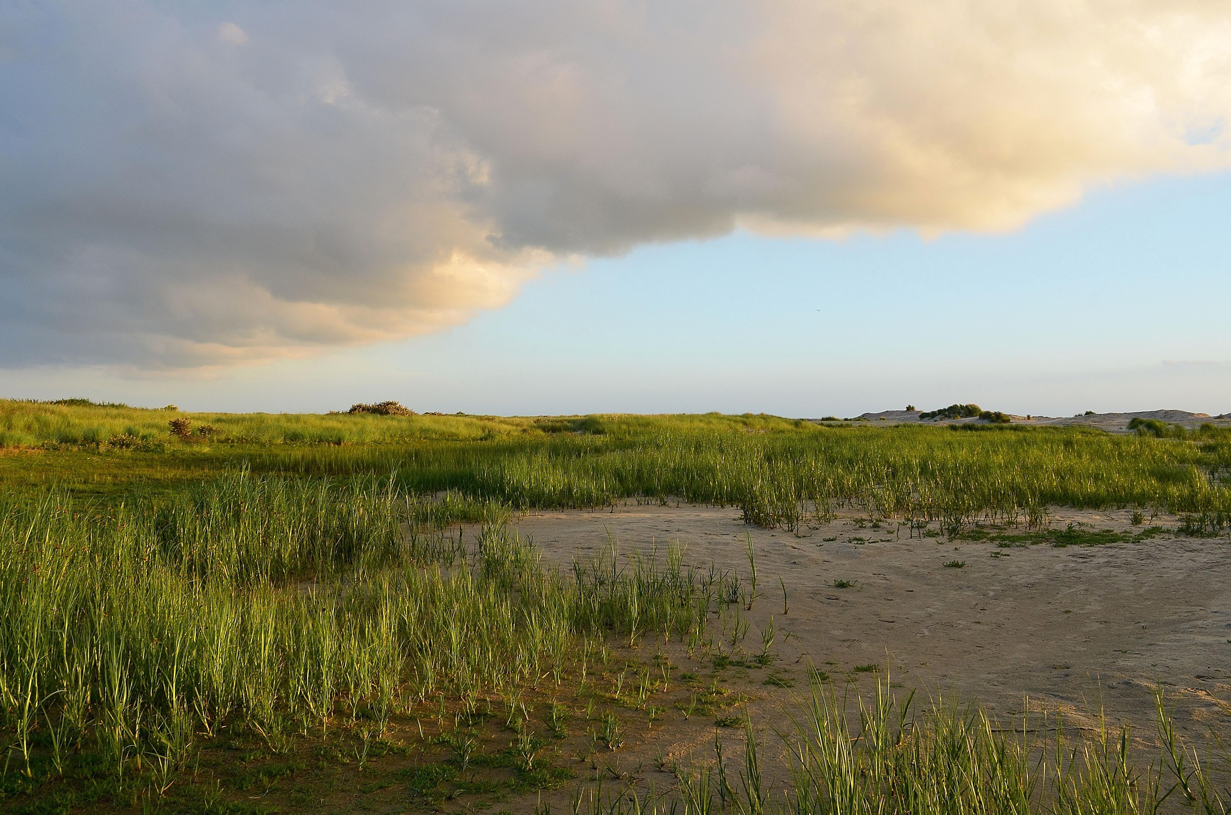 Free picture: landscape, grass, field, land, grassland