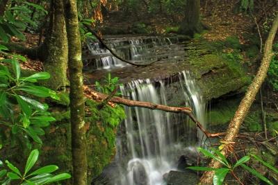 wood, water, waterfall, nature, tree, stream, leaf