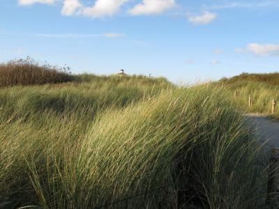 cảnh quan, cỏ, thiên nhiên, bầu trời, nước, lĩnh vực, lúa mì, reed