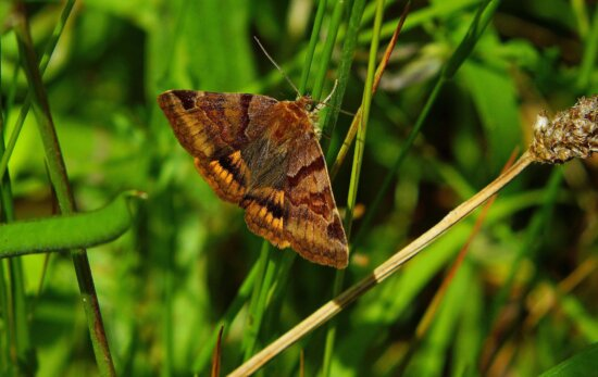 butterfly, nature, insect, garden, summer, moth