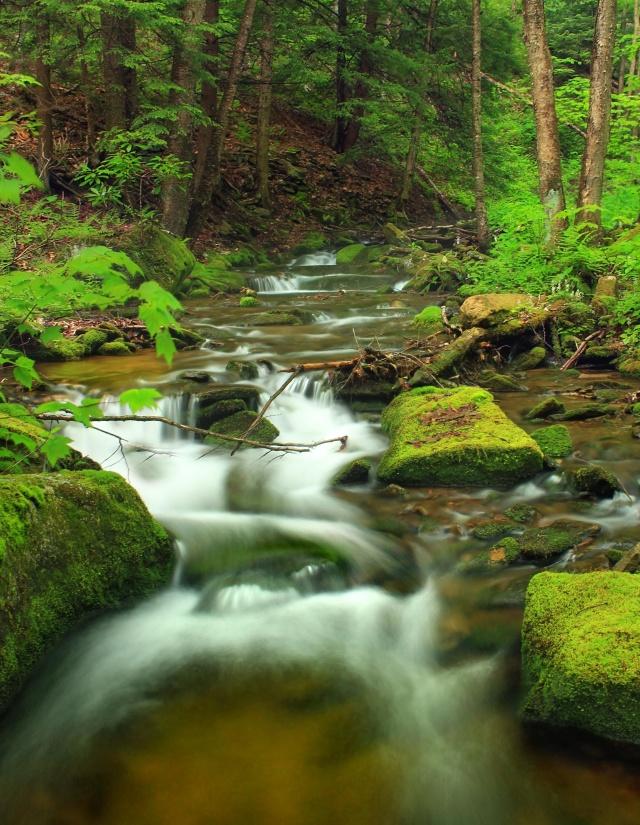 water, waterfall, stream, wood, nature, river, moss, creek, leaf