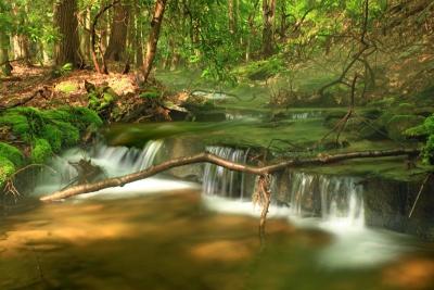 acqua, legno, natura, foglia, foresta, fiume, paesaggio, albero, bagnato, cascata, flusso