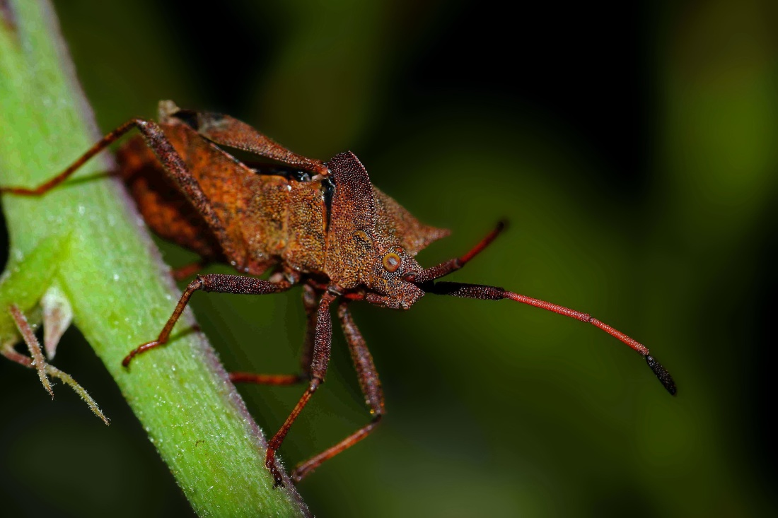 insect, invertebrate, wildlife, biology, zoology, nature, leaf, beetle