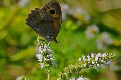 butterfly, nature, insect, wildlife, animal, flower, leaf