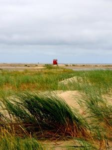 landscape, field, grass, nature, land, coast