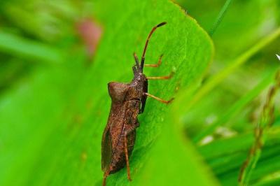 листя, комах, природа, камуфляж, членистоногих, Жук