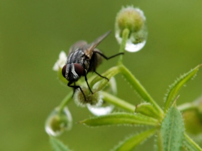 natur, insekt, leddyr, biologi, hvirvelløse, blad, dyreliv, græs, dyr