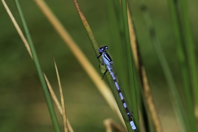 nature, insect, wildlife, arthropod, grass, dragonfly, animal, leaf, summer, invertebrate