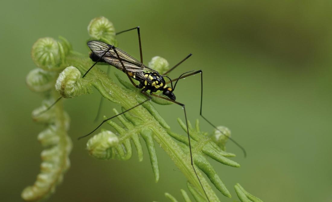 곤충, 자연, 무척추동물, 절지동물, 야생 동물, 나뭇잎, 동물, 야생, 생물학
