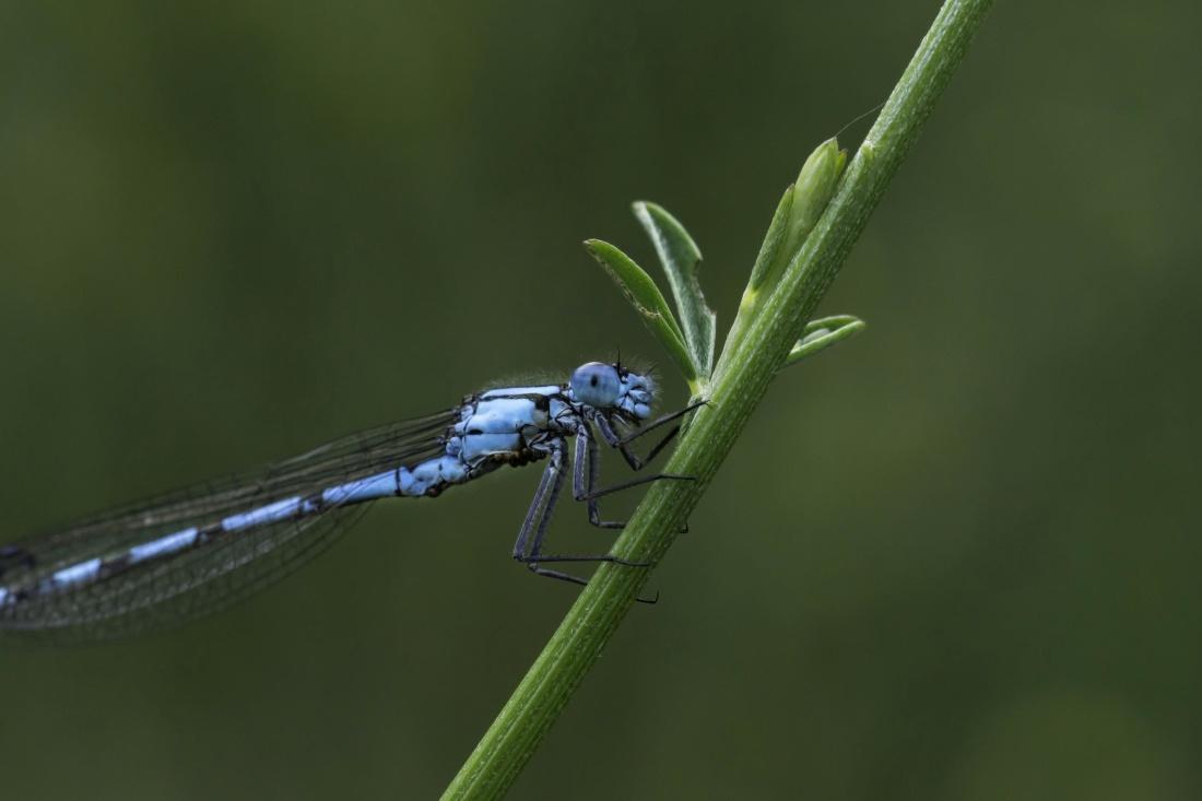 insect, dragonfly, invertebrate, nature, wildlife, arthropod, animal, daylight