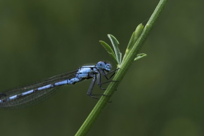 insect, dragonfly, invertebrate, nature, wildlife, arthropod, animal, daylight