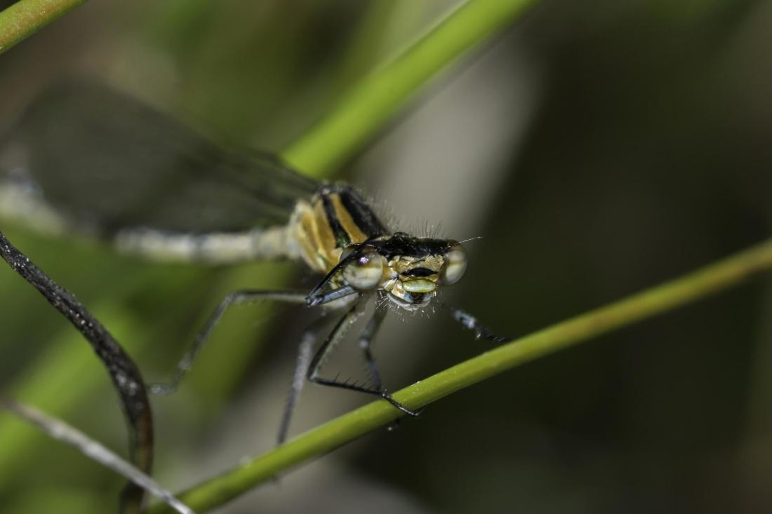 insect, invertebrate, dragonfly, wildlife, nature, arthropod, macro
