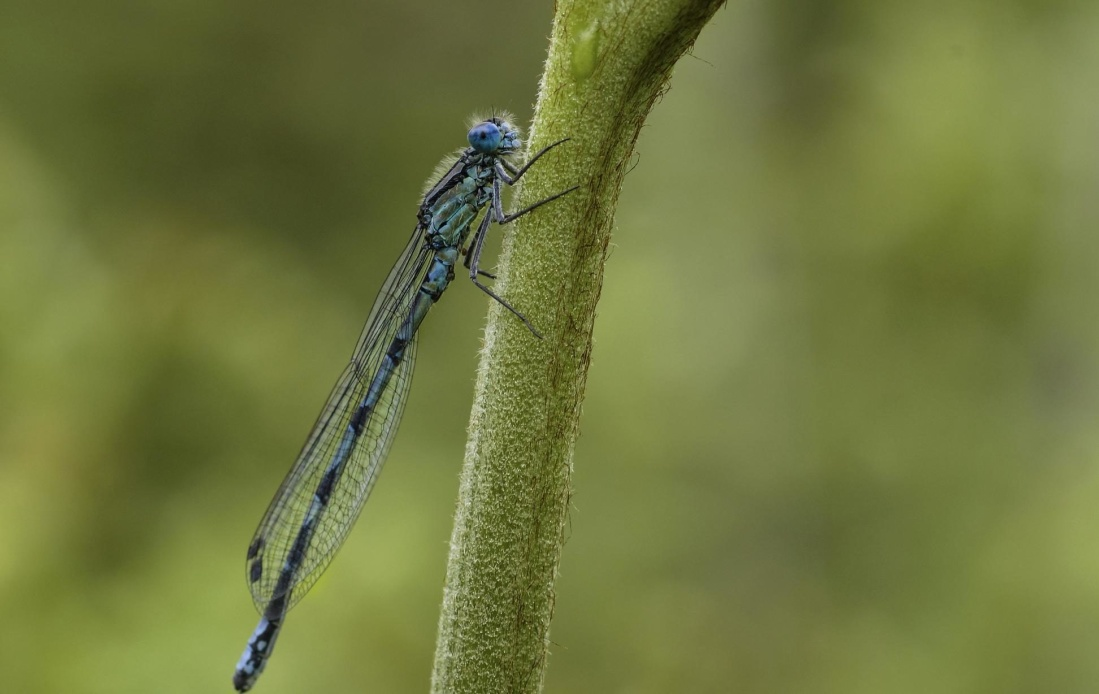 dragonfly, insect, nature, wildlife, arthropod, invertebrate