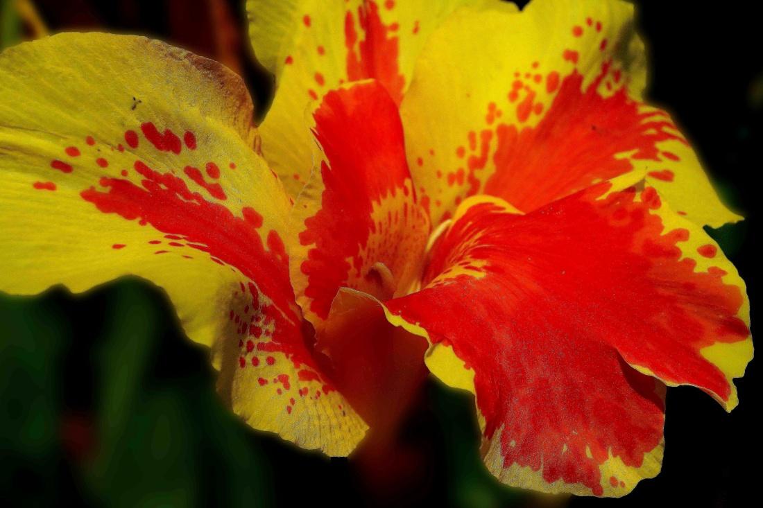nature, flower, flora, leaf, lily, pistil, macro, detail