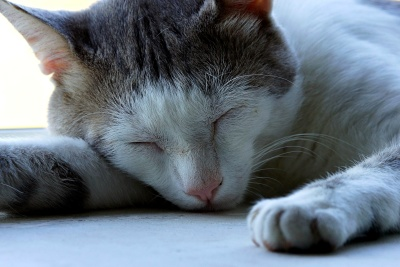 cat, animal, pet, cute, kitten, portrait, sleep, fur