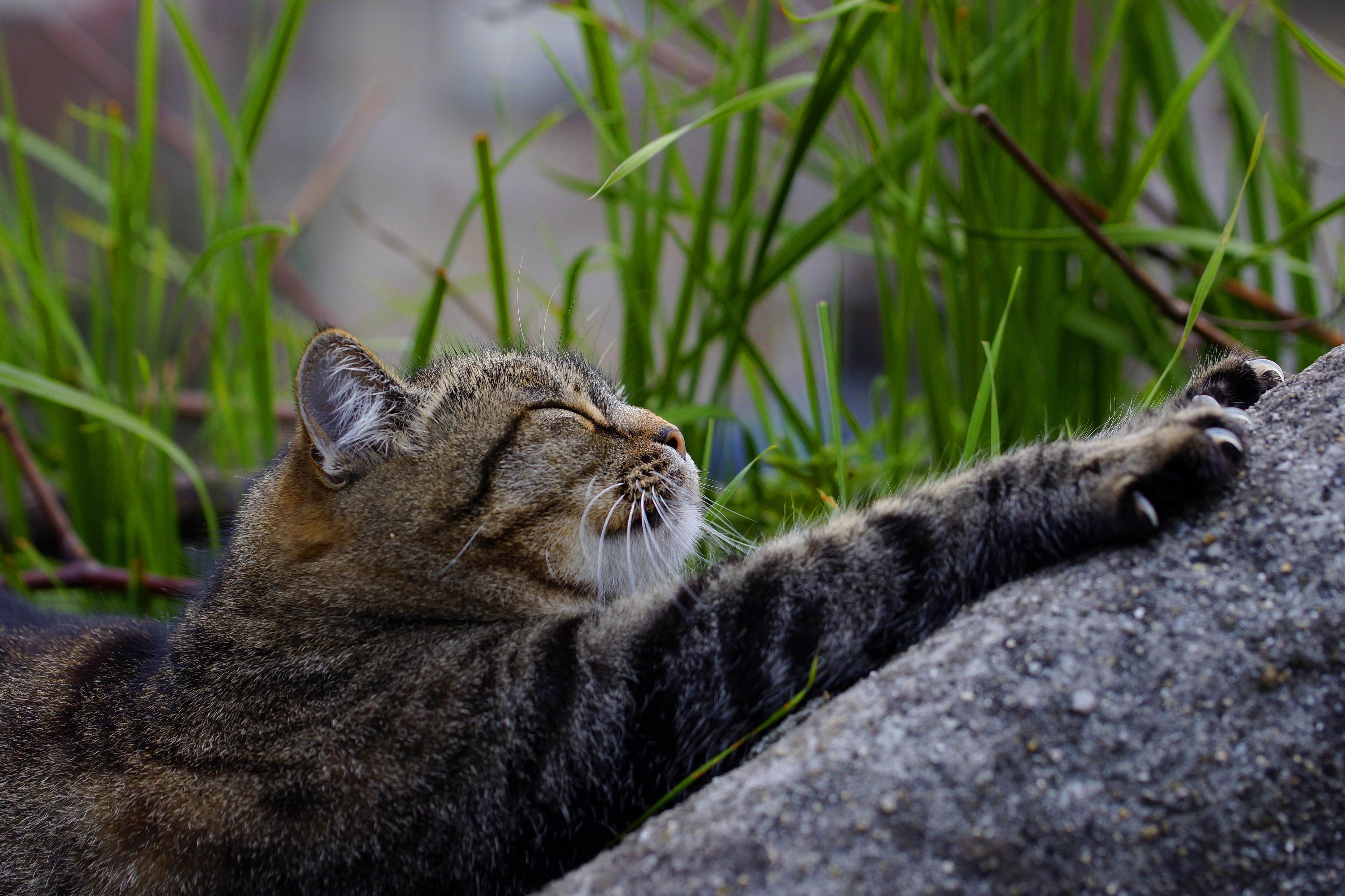 конце красивые картинки кошки на природе мушки, джиг-стримеры, айс-джиги