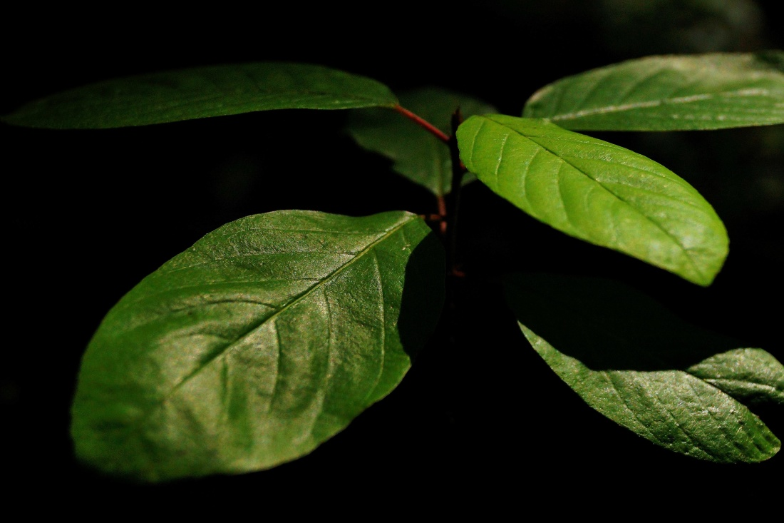 leaf, flora, nature, plant, environment, environmental, ecology