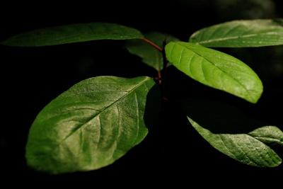lehtiä, flora, luonto, kasvi, ympäristö, ympäristö, ekologia