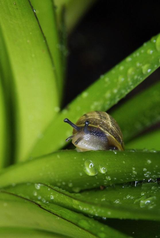 snail, invertebrate, gastropod, slow, rain, dew, wet