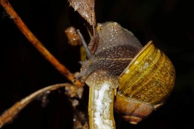Wirbellosen, Schalentiere, Insekten, Schnecke, ffnung, Wildtiere