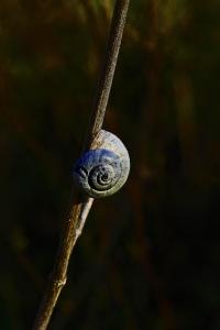 jardin, nature, flore, escargot