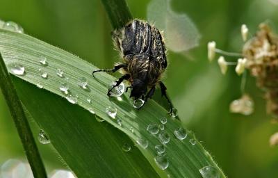 Príroda, leaf, spider, ARTHROPODA, makro, rosy, hmyzu, bezstavovcov, chrobák