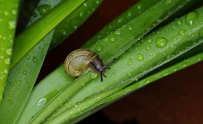 garden, snail, rain, nature, leaf, dew, macro