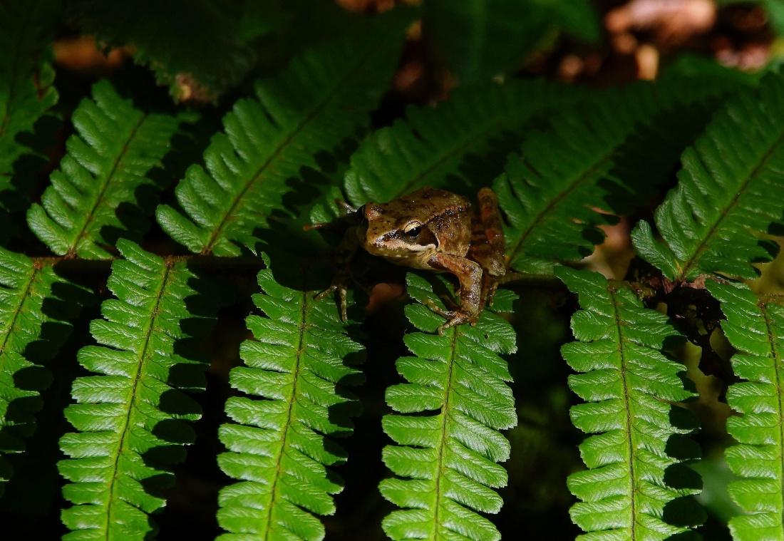 environment, frog, animal, wildlife, rainforest, leaf, fern, nature, plant