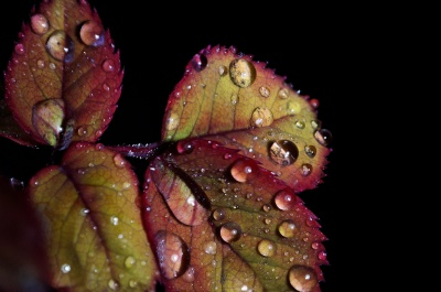 rosée, macro, nature, l'humidité, feuille, pluie