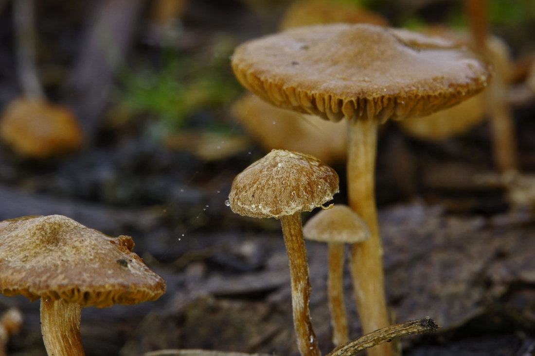 fungus, mushroom, spore, wood, poison, moss, nature, food, toxic
