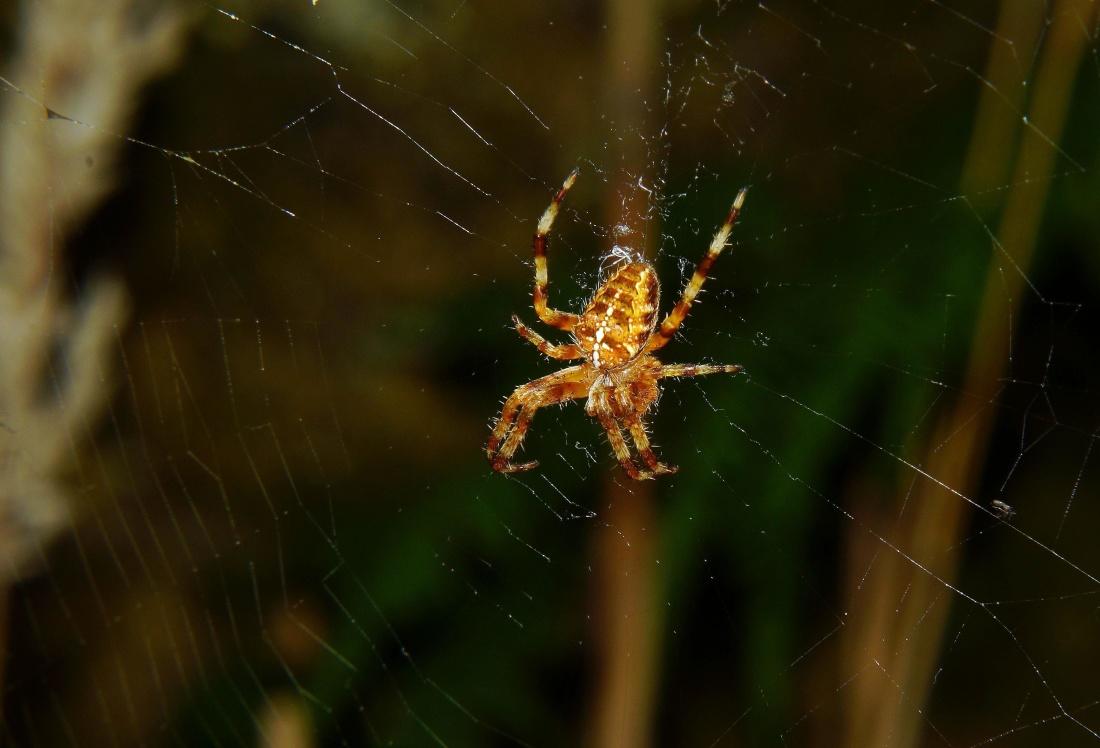 spider, spiderweb, trap, cobweb, insect, phobia, fear, dew, invertebrate