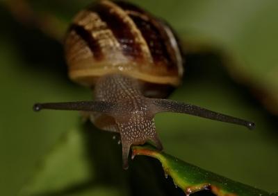 달팽이, gastropod, 무척추동물, 조개, 달팽이, 점액, 매크로