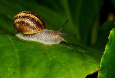 달팽이, 느린, gastropod, 무척 추 동물, 갑각류, 민 달팽이, 점액, 정원