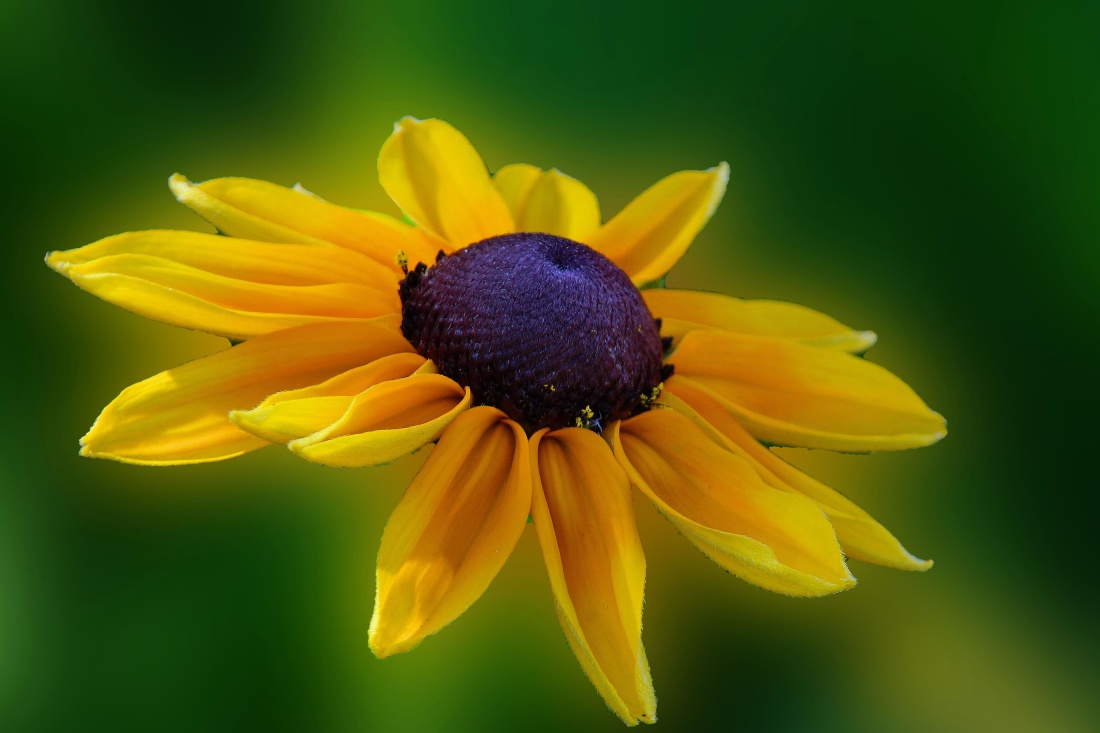 nature, summer, flower, leaf, photomontage, yellow, petal