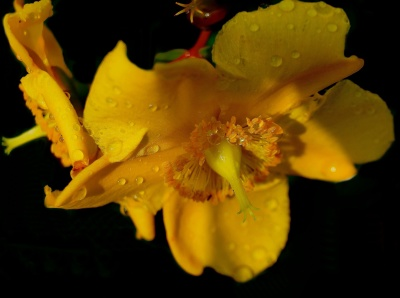 cvijet, prirodu, list, žuto, tučak, makronaredbe, pelud