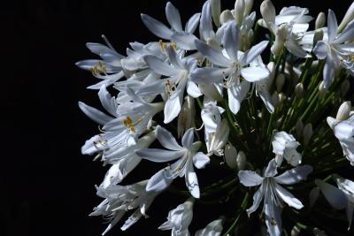 flower, nature, flora, blossom, plant, petal