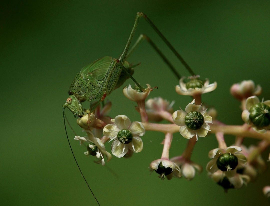 insect, nature, animal, wildlife, leaf, grasshopper, beetle, flower