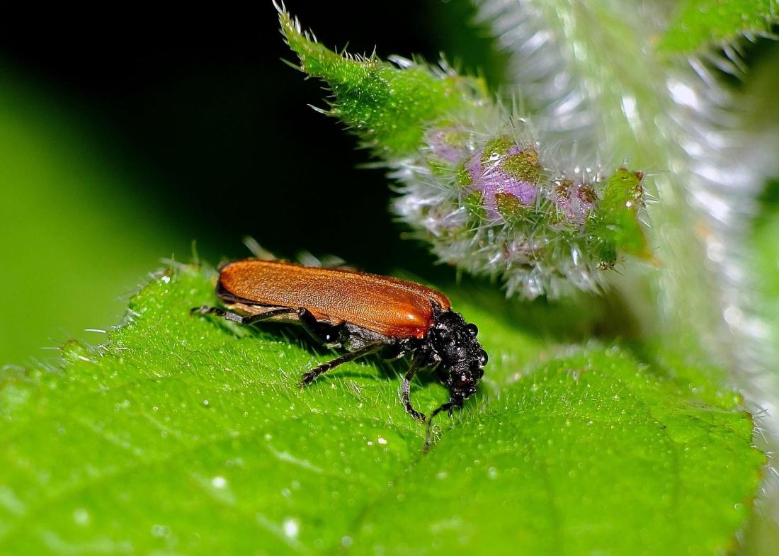 insect, nature, leaf, beetle, arthropod, macro