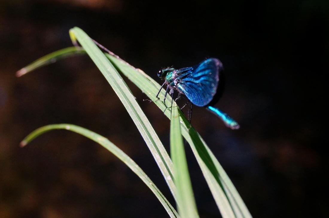 przyrody, natura, bezkręgowców, zwierząt, owadów, ważka