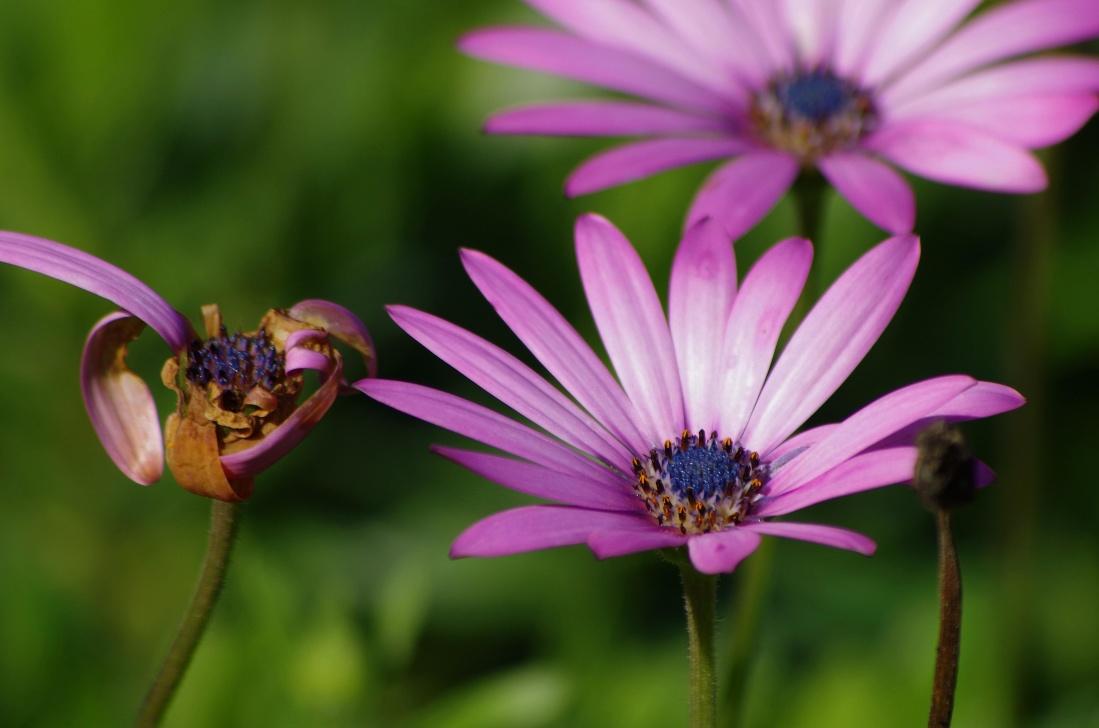 flor, naturaleza, jardín, flora, verano, planta, flores silvestres, detalles, macro